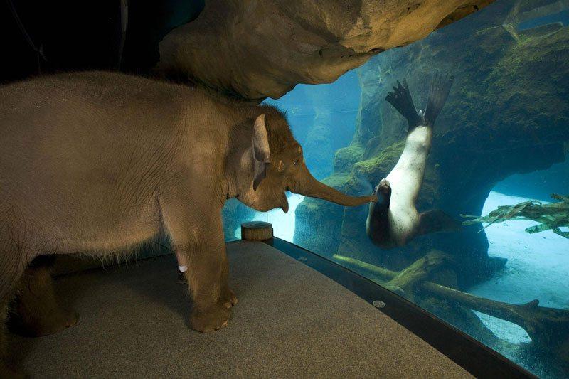 Elefantul si leul de mare